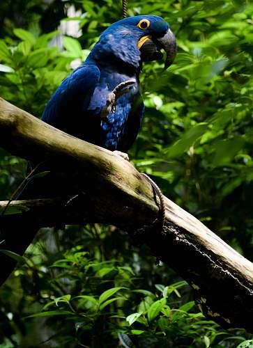 vegetation blue bird on tree animal