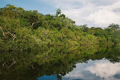 vegetation green-leafed trees land