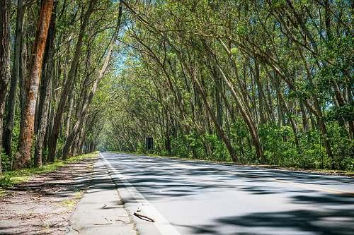 tree trees beside road freeway