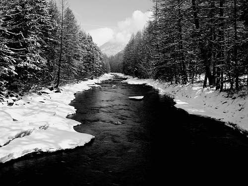 plant grayscale photography of flowing river near field and trees covered with snow tree