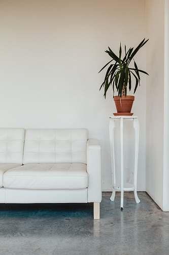 interior green leaf plant on brown pot vase