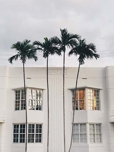tree white concrete building with palm tree in front arecaceae