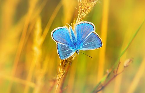 photo blue butterfly perched on grass at daytime free for commercial use images