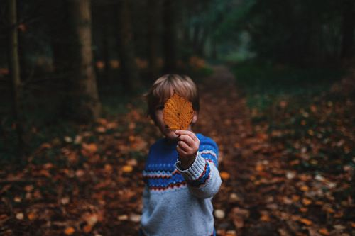 photo boy holding brown leaf covering his face free for commercial use images