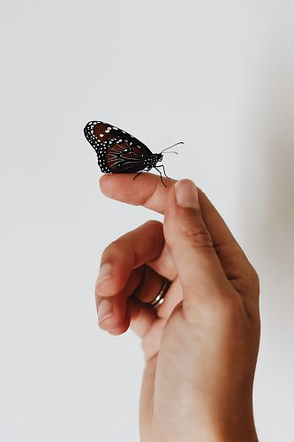 photo brown and black butterfly on person index finger free for commercial use images