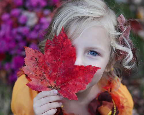photo girl holding red maple leaf free for commercial use images