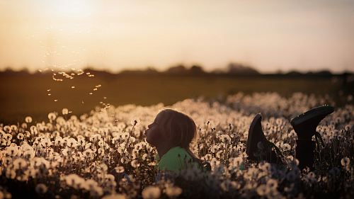 girl lying on dandelion field