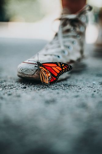 photo selective focus photo of butterfly on shoe free for commercial use images