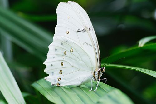photo white butterfly on green leafed plant free for commercial use images