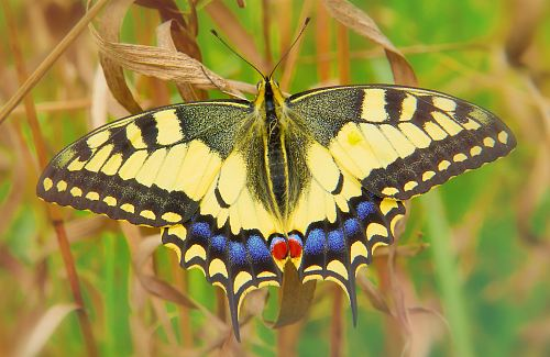 yellow butterfly on dried leaf