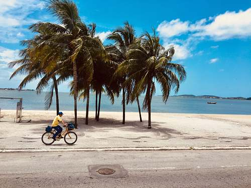 bicycle man riding bicycle near the beach during daytime transportation