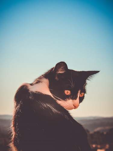 cat black and white cat in selective focus photograhy animal