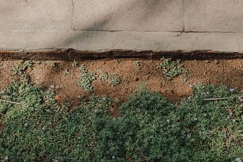 pavement green grass near gray concrete pavement grass
