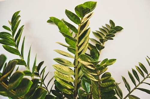 plant green leaf plant close-up photo fern