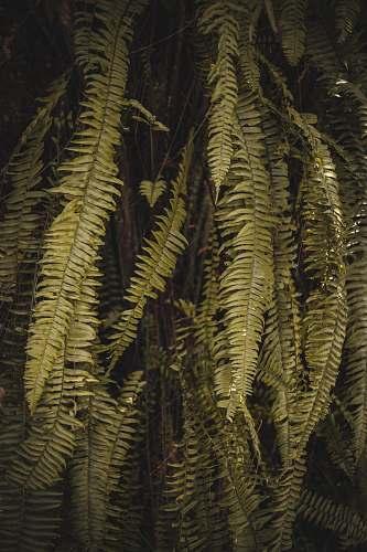 plant green leafed tree fern