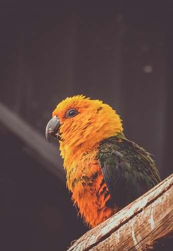bird orange and green bird perch on brown tree branch close-up photography animal