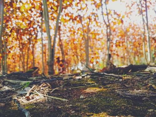 vegetation brown leafed trees forest