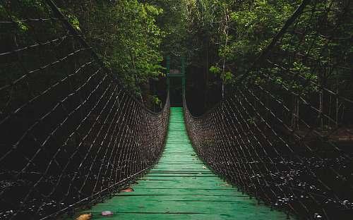 bridge green bridge forest