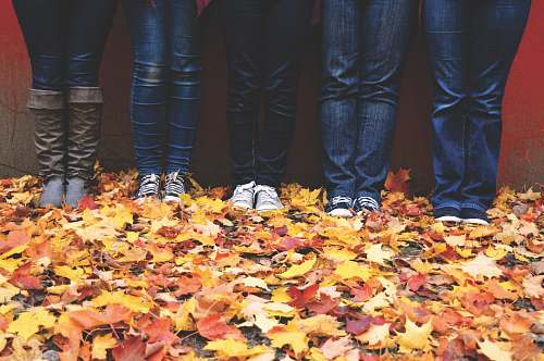 crabtree five people wearing blue denim jeans standing near maple leaves canada