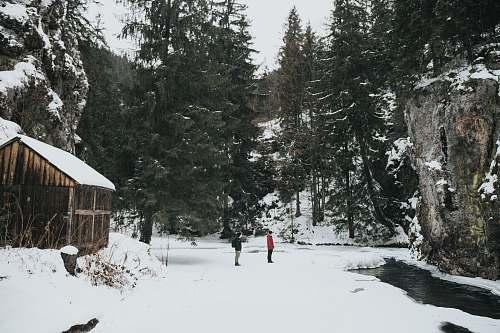 tree people standing on snowfield gârda de sus