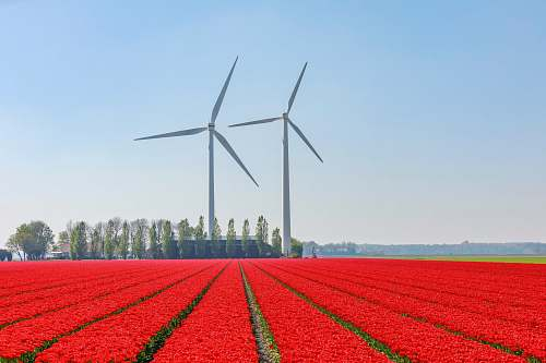 motor red flower field near wind turbines engine