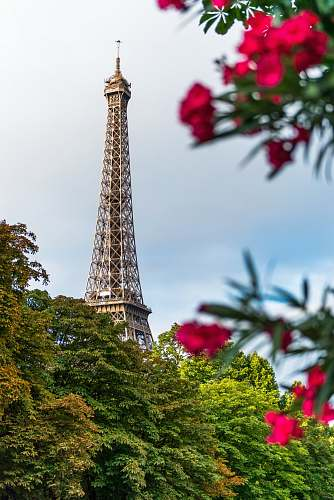 tower red flowers paris
