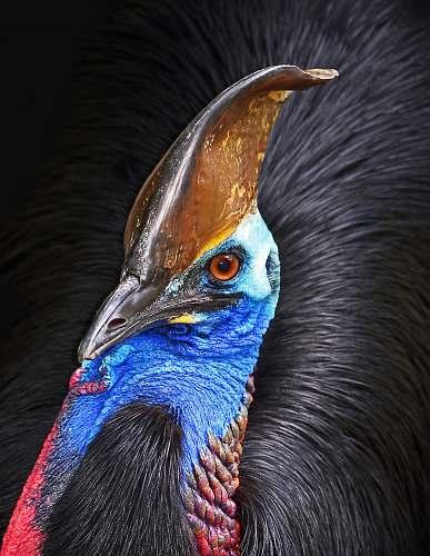 animal brown and blue bird bird