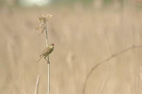 bird selective focus of bird on flower animal