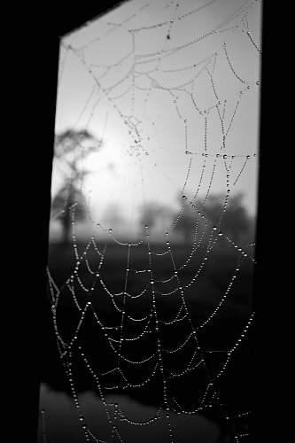 black-and-white spider web grayscale photo spider web
