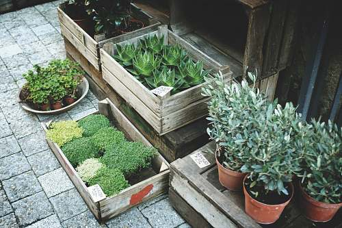 potted plant boxes of green leafed plants on grey pavement pot