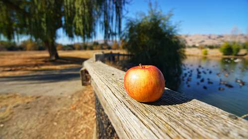 apple red apple on brown wooden fence food