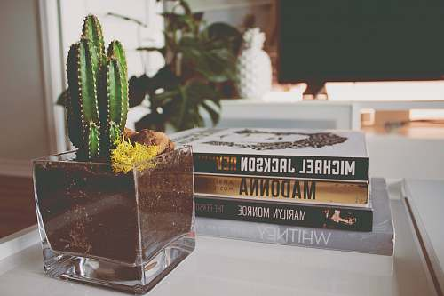 plant cactus near four novel books potted plant