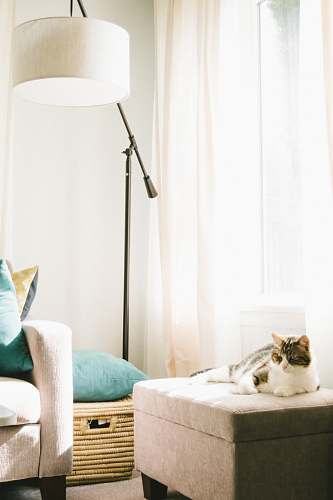 furniture gray and white cat lying on brown ottoman near sofa, clothes hamper and floor lamp inside well-lighted room ottoman