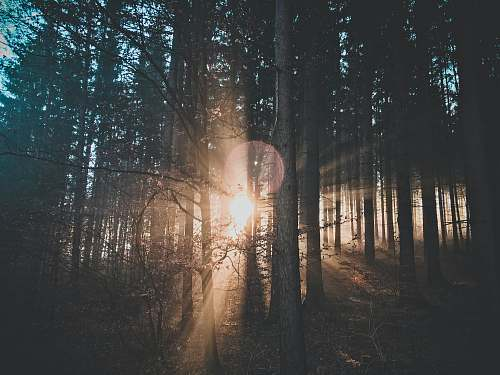 light silhouette of trees flare