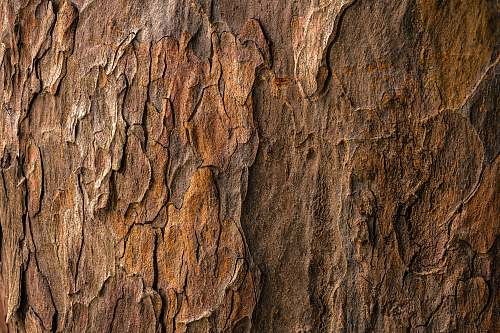 photo texture brown tree bark in closeup photography bark free for commercial use images