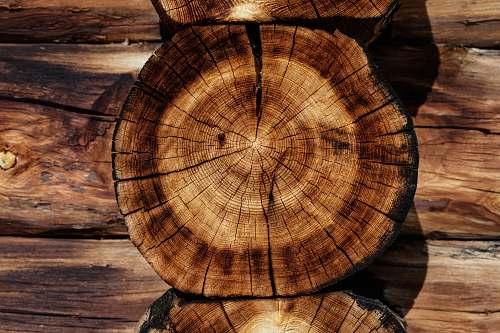 tree brown tree log log