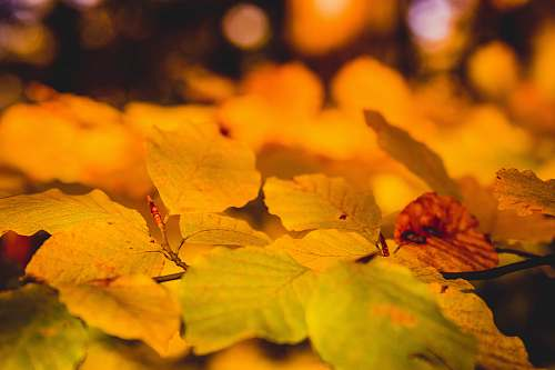 nature macro shot of leaves outdoors