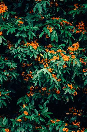 plant orange petaled flower bush