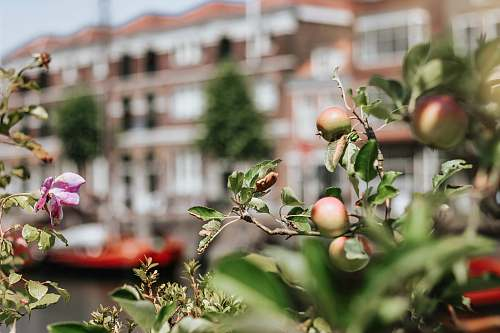 food selective focus photography of green plants apple