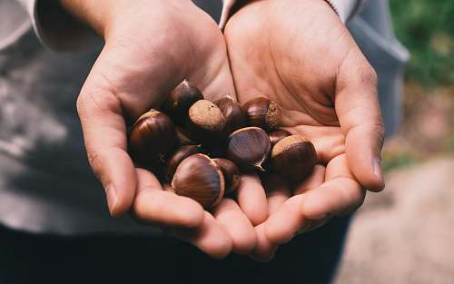 human selective focus photography of person holding nuts person