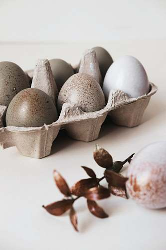 flora six gray poultry eggs on brown tray food