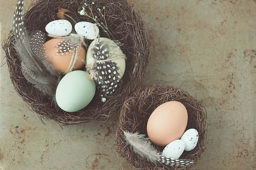 egg five white and brown poultry eggs nest