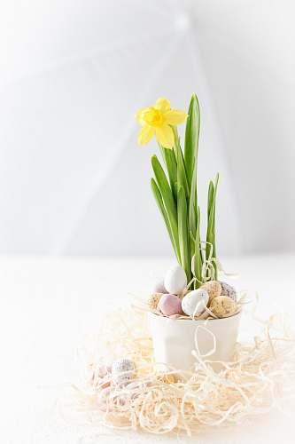 food yellow flower plant