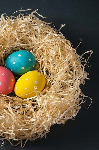 food blue and yellow egg on brown nest melitopol'