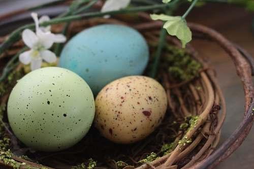 food blue egg on brown nest eggs