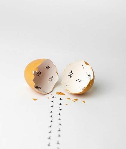 egg brown egg curiosity