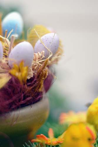 egg white and yellow flower in close up photography easter egg