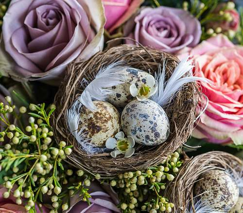 people quail eggs on brown nest with flowers person