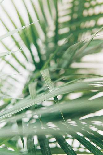 green closeup photography of green palm leaves nature