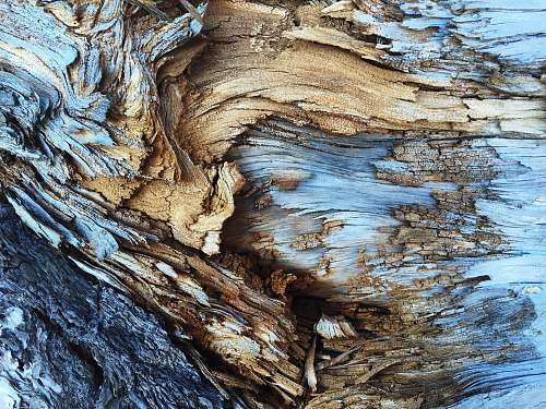 nature An abstract texture in light brown and blue tree bark abstract
